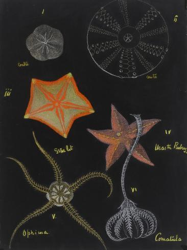 Echinoderms Giclee Print
