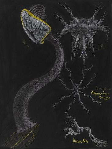 Goose Barnacle: Sea Spider Giclee Print