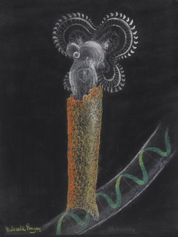 Limnias Melicerta: Rotifer Giclee Print