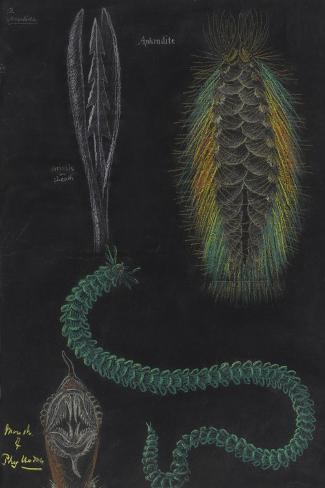 Marine Worms Giclee Print