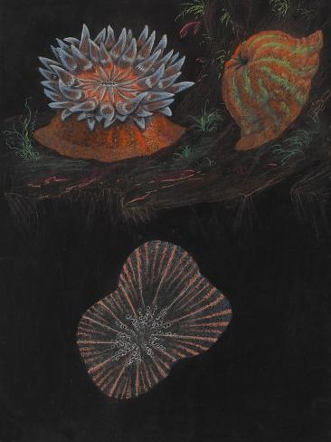 Sea Anemone Giclee Print