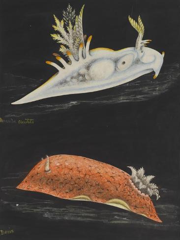 Sea Slugs Giclee Print