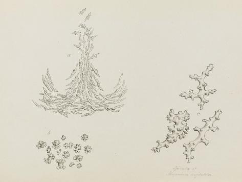 Spicula of Alcyonium Digitatum: Dead Mans Fingers Giclee Print