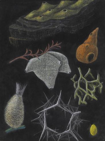 Sponges Giclee Print
