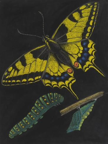 Swallowtail Butterfly Giclee Print