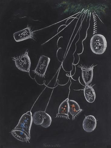 Vorticella Giclee Print
