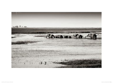 Chobe River Botswana Stretched Canvas Print