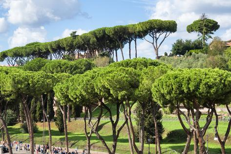 Dolce Vita Rome Collection - Green Trees Photographic Print