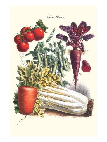 Vegetables; Carrot, Beet, Tomato, and Celery Art Print