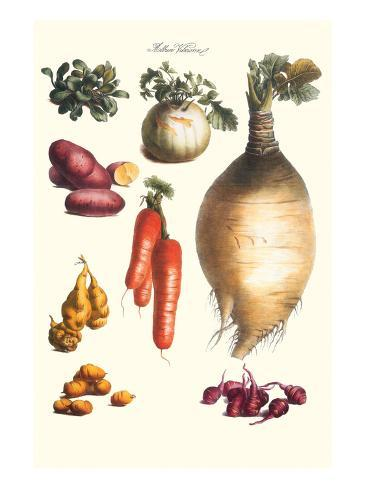 Vegetables; Onion, Potato, Carrot, Roots, Tubers Art Print