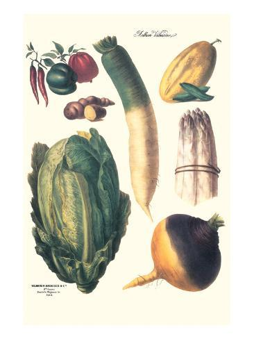 Vegetables; White Asparagus, Spago, Peppers, Cabbage, Turnip Art Print
