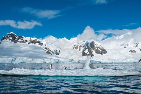 Gentoo Penguins on Iceberg Antarctica Photographic Print