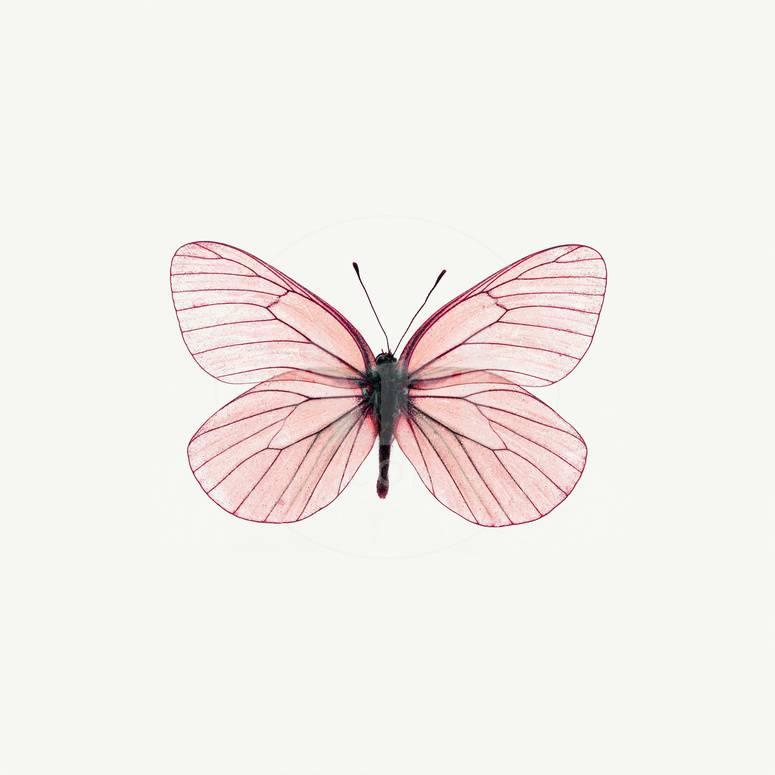 Pink Butterfly Photographic Print Photoinc Allposters Com