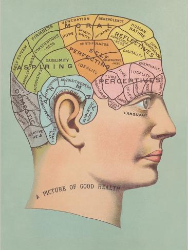 Phrenology Chart of Head Art Print