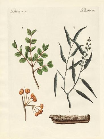 Piante ed erbe medicinali Stampa giclée