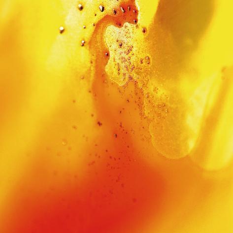 Yellow and Orange Swirling Abstract, c. 2008 Premium Giclee Print