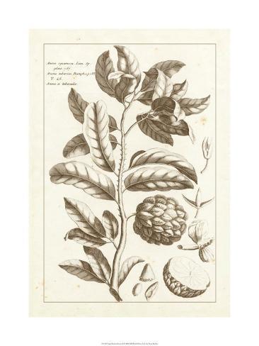 Sepia Exotics I Premium Giclee Print