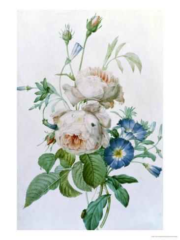 Rosa Damascena Giclee Print