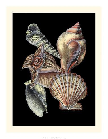 Treasures of the Sea I Giclee Print