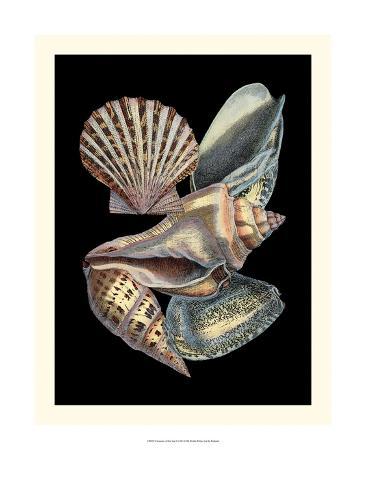Treasures of the Sea II Art Print