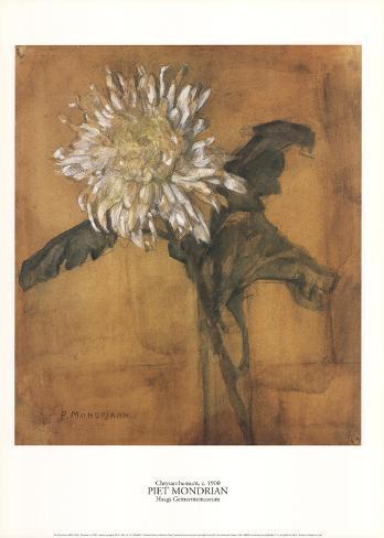 Chrysanthemum Impressão colecionável