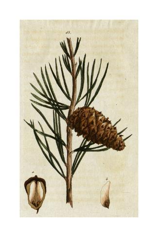 Pinecones and Needles Art Print