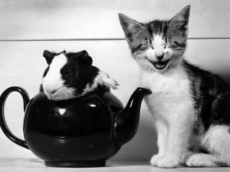 Pinkie the Guinea Pig and Perky the Kitten Tottenahm London, September 1978 Photographic Print