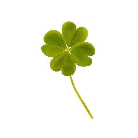 オールポスターズの pixelrobot four leaf clover 写真プリント