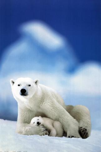 Polar Bear and Baby Poster