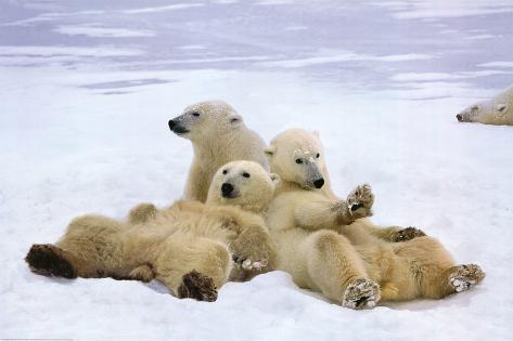 Polar Bear (Playtime) Art Poster Print Poster