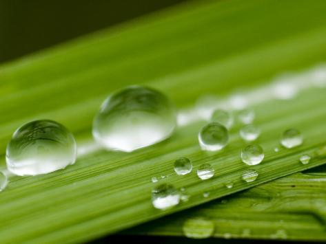 Water Droplets on Grass, Dali, Yunnan, China Photographic Print