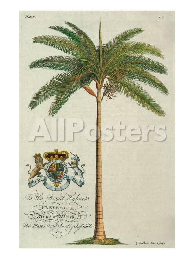 Palmera real Lámina giclée prémium por Porter Design en AllPosters.es