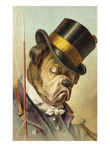 Postcard of a Bulldog Coachman Asleep Stretched Canvas Print