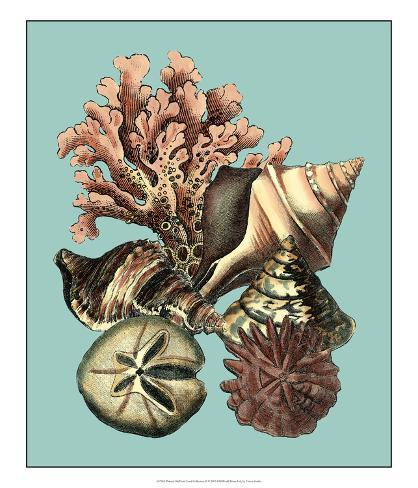 Printed Shell & Coral Collection II Giclee Print