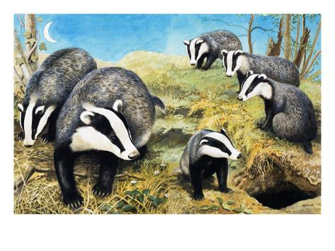 Badgers, from 'Nature Wonderland', 1970 Giclee Print