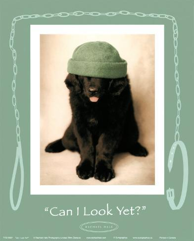 Can I Look Yet Art Print