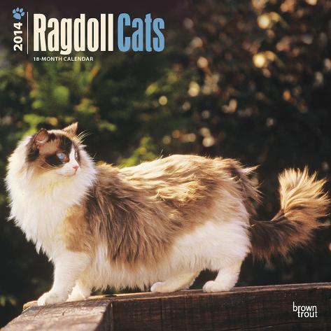Ragdoll Cats - 2014 Calendar Calendars