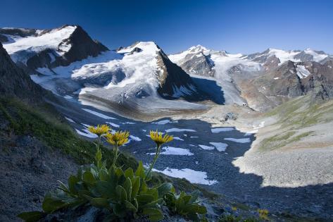 Austria, Tyrol, …tztaler Alpen, Wildspitze, Summit, Pippau, Crepis Photographic Print