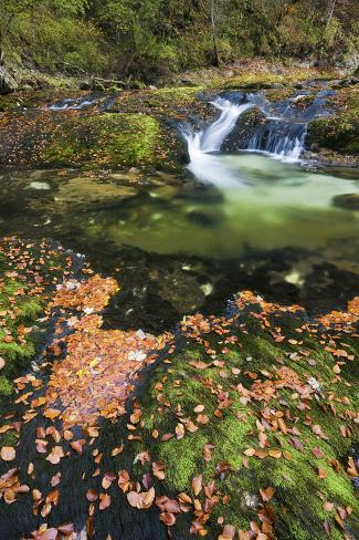 Forest, Brook, Leaves, Autumn, Moss Photographic Print