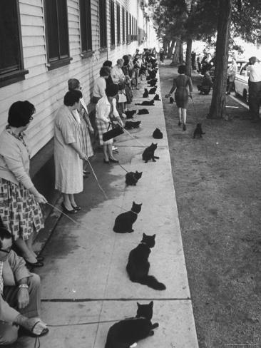 Owners with Their Black Cats, Waiting in Line For Audition in Movie