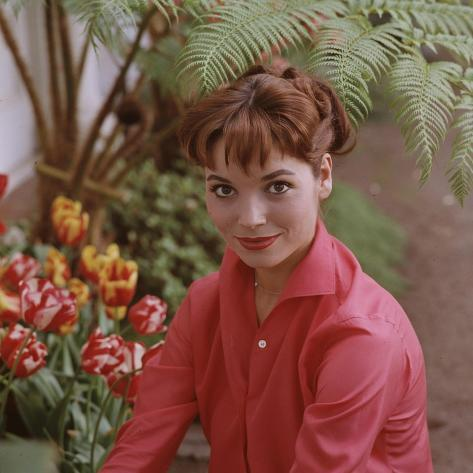 Portrait of Actress Elsa Martinelli Premium Photographic Print