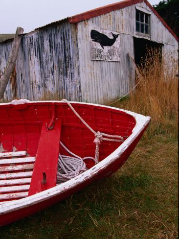 Red Boat Outside Shed with a Stop Whaling Sign Photographic Print