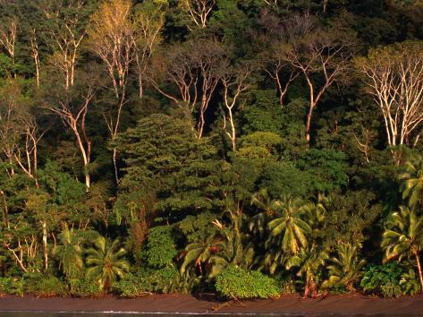 Tropical Rainforest, Corcovado National Park, Puntarenas, Costa Rica Photographic Print