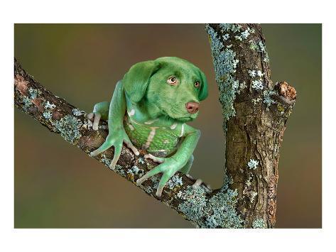 rare-dog-frog_a-G-14509031-0.jpg