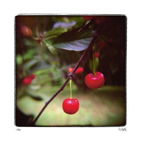 Jacquie's Cherries Giclee Print