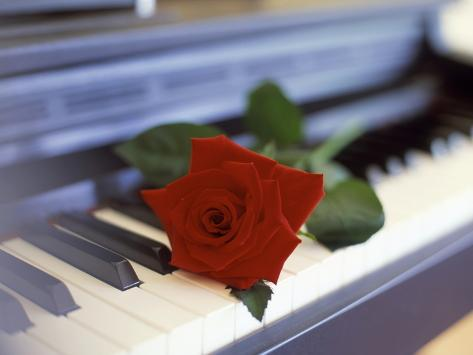 Red Rose on Piano Stretched Canvas Print