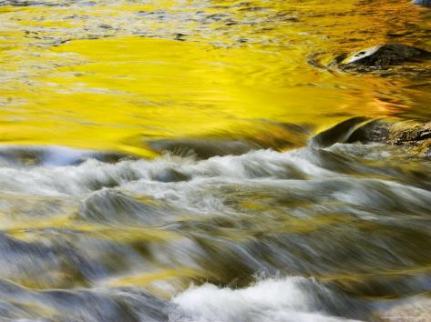 Reflections of Spring in Stream, Great Smoky Mountain National Park, Tennessee, USA Photographic Print