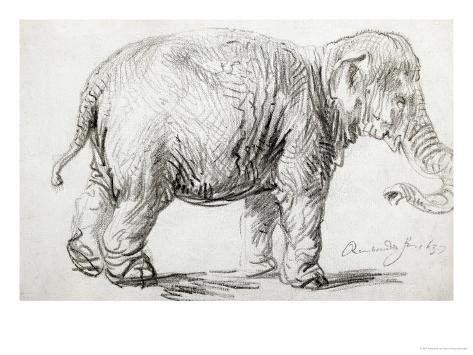 Elephant, 1637, Black Chalk Drawing Giclee Print