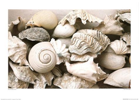 ie Still Life with Shells Art Print