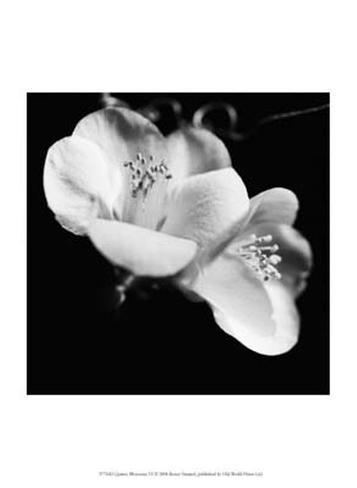 Quince Blossoms VI Art Print